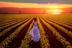 Kvinna på påskliljafält som tycker om solnedgång arkivfoton