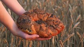 Kvinna` s räcker att rymma ett stort doftande bröd med vallmofrön på bakgrunden av vetespikelets Närbild av bröd in lager videofilmer