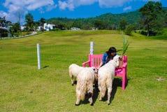 Kvinna som är lycklig av lantgård Fotografering för Bildbyråer