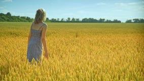 Kvinna som analyserar vetestjälk Kvinnaagronom i vetefält tyck om naturen arkivfilmer