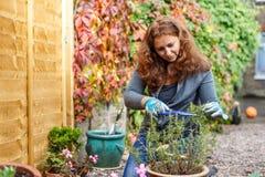 Kvinna som arbeta i trädgården i hösten Arkivfoto