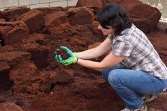 Kvinna som arbetar i den trädgårds- mitten som composting, royaltyfri fotografi