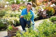 Kvinna som arbetar i trädgårds- mitt royaltyfri bild