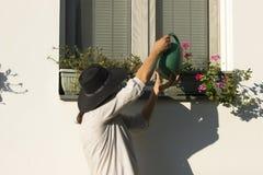 Kvinna som bevattnar blommahusgården arkivfoto