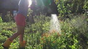 Kvinna som bevattnar blomman och kryddan i solig sommardag för trädgård 4K stock video