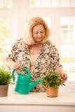 Kvinna som bevattnar växten Royaltyfria Bilder