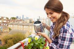 Kvinna som bevattnar växten i behållare på takträdgård Royaltyfria Foton