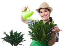 Kvinna som bevattnar växter Arkivfoto