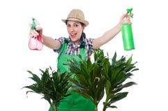 Kvinna som bevattnar växter Arkivbild