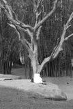 Kvinna som bugar hennes huvud till ett träd Fotografering för Bildbyråer