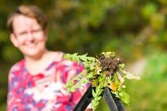 Kvinna som drar ogräs arkivfoton