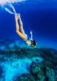 Kvinna som dyker till havsbotten Arkivfoton