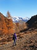 Kvinna som fotvandrar i höstskogen i berg Rekreation och sund livsstil utomhus i natur royaltyfria foton