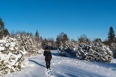 Kvinna som går i en winterland Royaltyfri Bild
