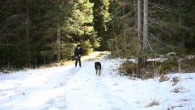 Kvinna som går och spelar med hennes hund i skogen stock video