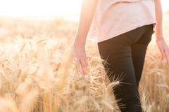 Kvinna som går och trycker på öron av vete, solljuseffekt royaltyfri bild
