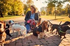 Kvinna som g?r en grupp av hundkappl?pning och utomhus tycker om royaltyfri fotografi