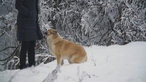 Kvinna som g?r med en hund arkivfilmer