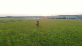 Kvinna som galopperar på ett fält, bästa sikt _ arkivfilmer
