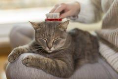 Kvinna som kammar den älsklings- katten fotografering för bildbyråer