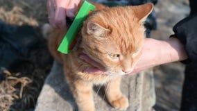 Kvinna som kammar en utomhus- katt lager videofilmer