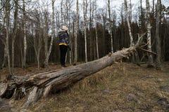 Kvinna som klättrar på ett stupat träd i en skog på stranden nära Östersjön royaltyfria bilder