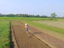 Kvinna som krattar förbereda jorden på grönsakfältotta i Hoi An Vietnam royaltyfri foto