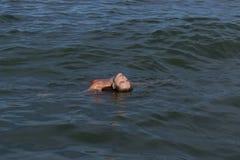 Kvinna som ler i havsbadet, sommar arkivbilder