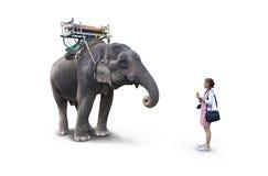 Kvinna som matar elefantbananerna Arkivbild
