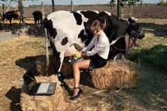 Kvinna som mjölkar kon Arkivbild