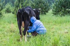 Kvinna som mjölkar kon Fotografering för Bildbyråer