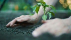Kvinna som planterar en växt arkivfilmer