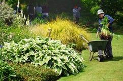 Kvinna som planterar i trädgård med skottkärran Royaltyfri Foto