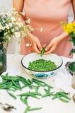 Kvinna som podding nya ärtor i köket Kvinna som podding den nya ärtan Royaltyfri Fotografi