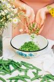 Kvinna som podding nya ärtor i köket Kvinna som podding den nya ärtan Arkivbilder