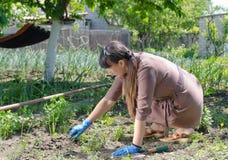 Kvinna som rensar hennes grönsakträdgård Arkivfoto