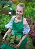 Kvinna som rymmer en ask med växter i hennes händer i trädgårds- mitt Fotografering för Bildbyråer