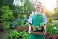 Kvinna som rymmer en ask med växter i hennes händer i trädgårds- mitt Royaltyfri Bild