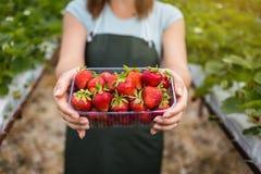 Kvinna som rymmer en saftig biten jordgubbe in i kameran, strawber arkivfoton