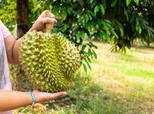 Kvinna som rymmer en stor tung Durian i Durianlantgården Royaltyfria Foton