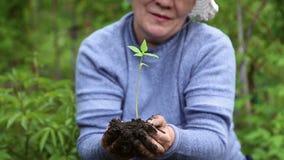 Kvinna som rymmer ett ungt träd av blomman med jord stock video