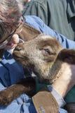 Kvinna som rymmer ett vänligt lamm Fotografering för Bildbyråer