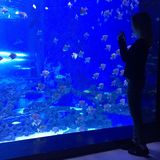 Kvinna som ser akvariet Royaltyfria Foton