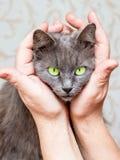 Kvinna som smeker hennes älskade katt som rymmer henne i henne händer symbol arkivbild
