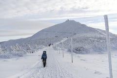Kvinna som trekking i tid för Karkonosze bergvinter poland Royaltyfri Bild
