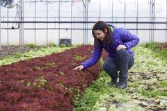 Kvinna som väljer organiska grönsaker Arkivbild