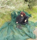 Kvinna som vilar, når insamling av olivgrön Royaltyfri Bild