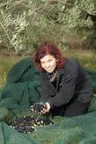 Kvinna som vilar, når insamling av olivgrön Royaltyfria Bilder