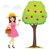 Kvinna som väljer Apple Royaltyfria Bilder