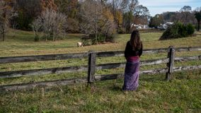 Kvinnaanseende av det red ut staketet som ser hästar royaltyfri foto